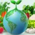 India: a market to be cultivate! Data and opportunities, starting from the food business