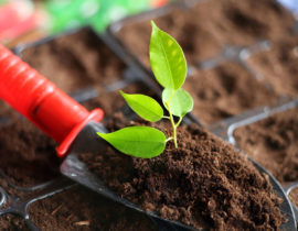 PRC Soil Law Published, Three Practical Suggestions