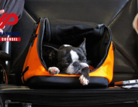 Travelling with your pet from China to Russia
